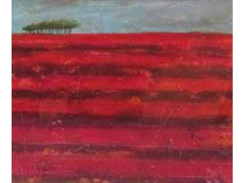 Morag Smith red field near Johnshaven